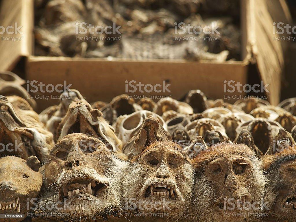 Shrink Heads royalty-free stock photo