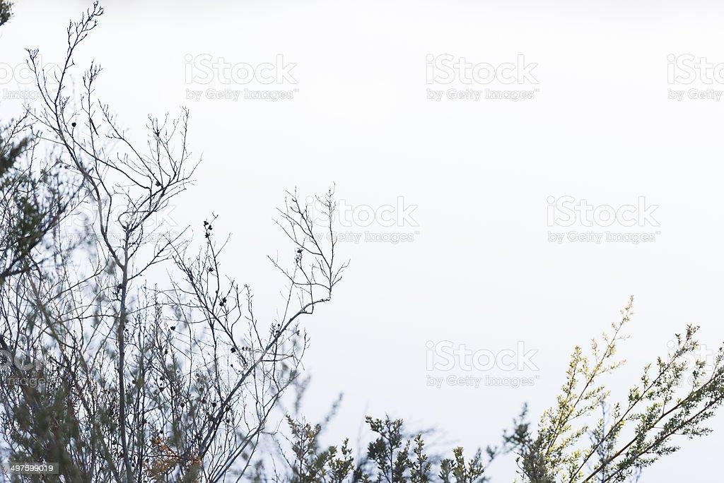 Arbusto no branco céu foto royalty-free