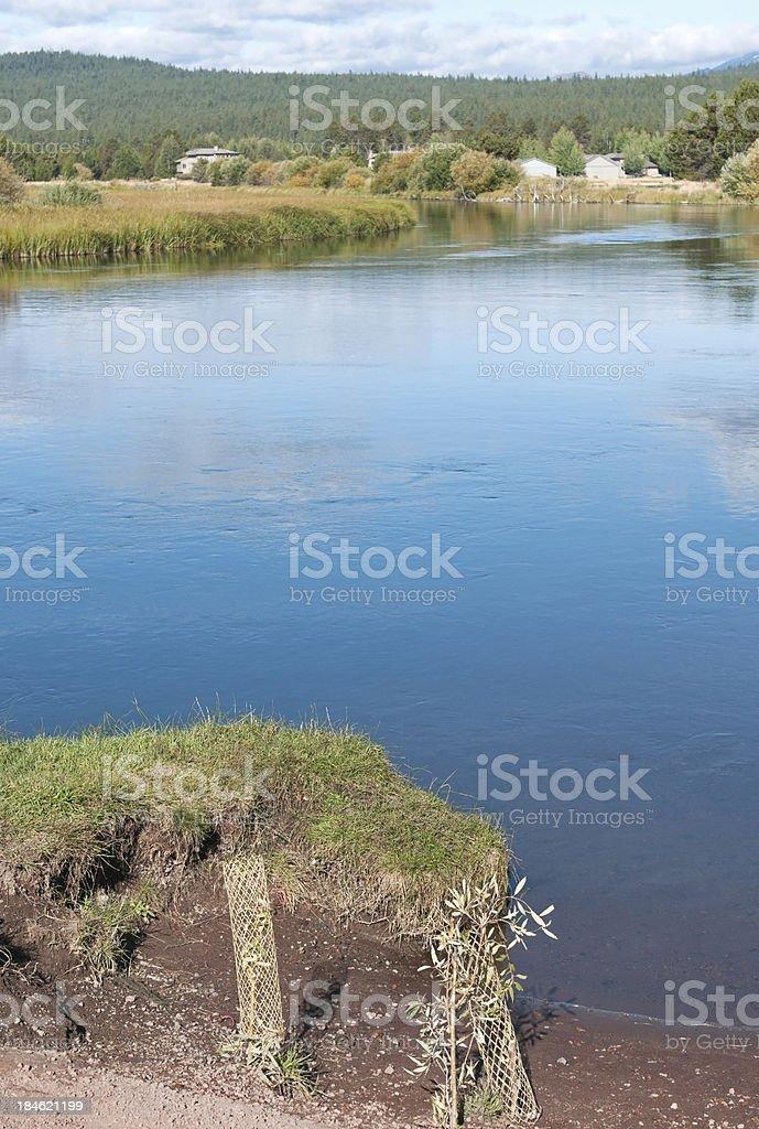 Shrub saplings replanted on eroded riverbank stock photo