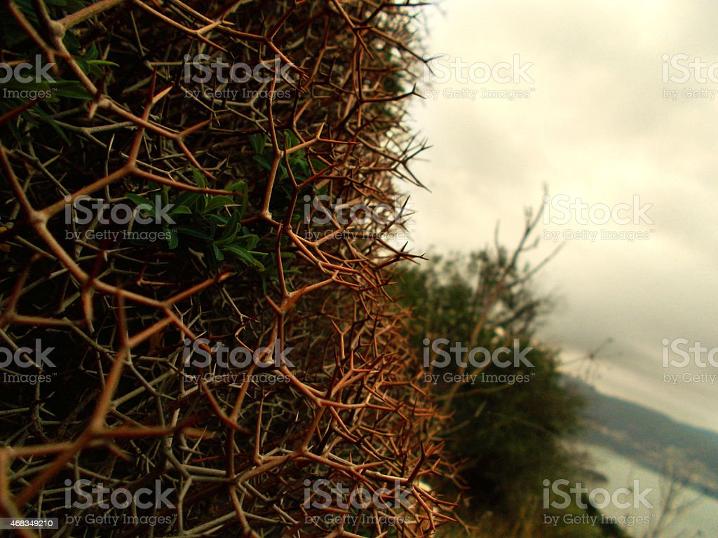 Shrub with thorns stock photo