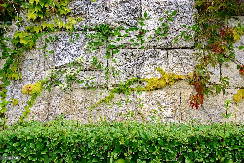 Shrubs and gray Stone Wall in Summer stock photo