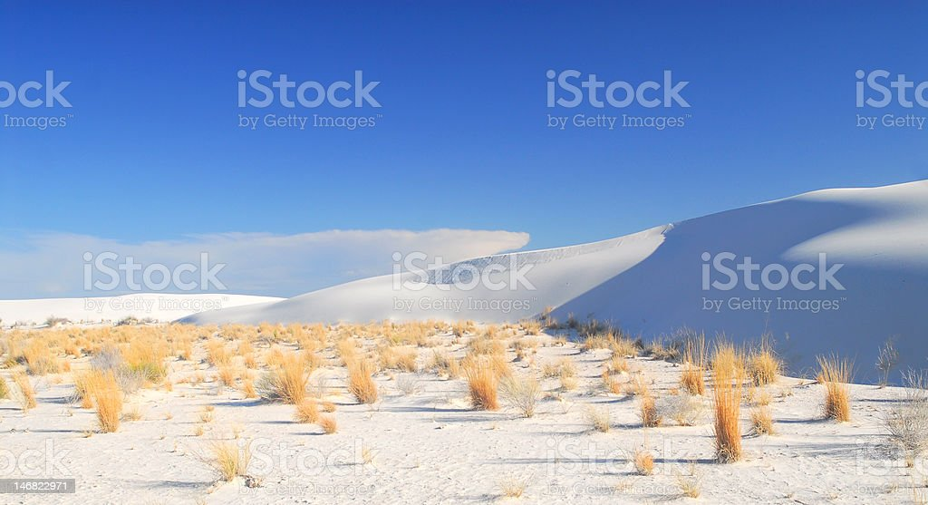 Shrubs growing in the White Sand Dunes National Park stock photo