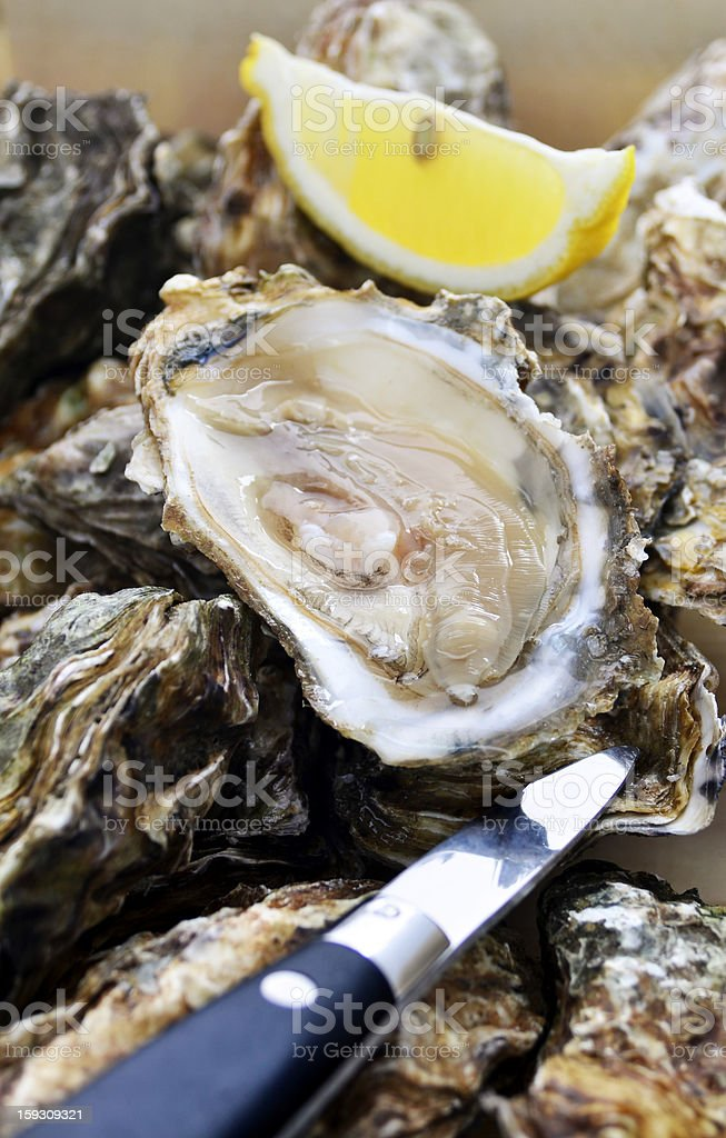 Shucked oyster stock photo