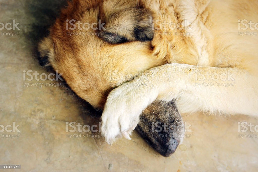 Shy Dog stock photo
