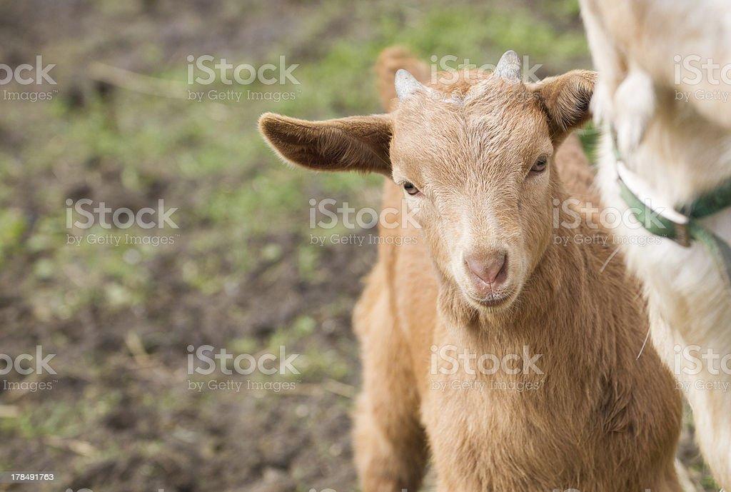 Shy kid royalty-free stock photo