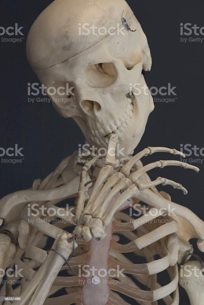 Shy Plastic Bones royalty-free stock photo