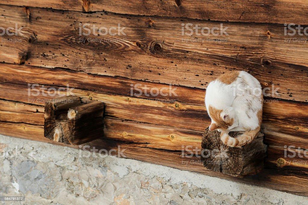 shy yellow-white cat stock photo
