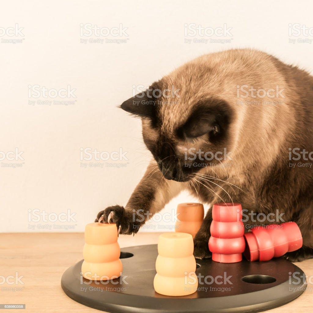 Siamese cat solving pet puzzle - square. stock photo