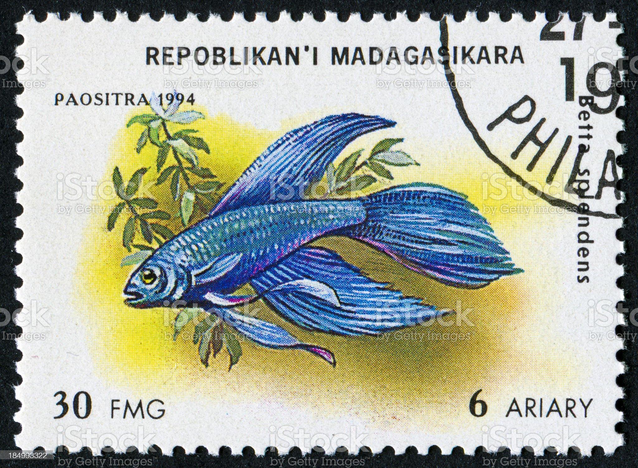 Siamese Fighting Fish Stamp royalty-free stock photo