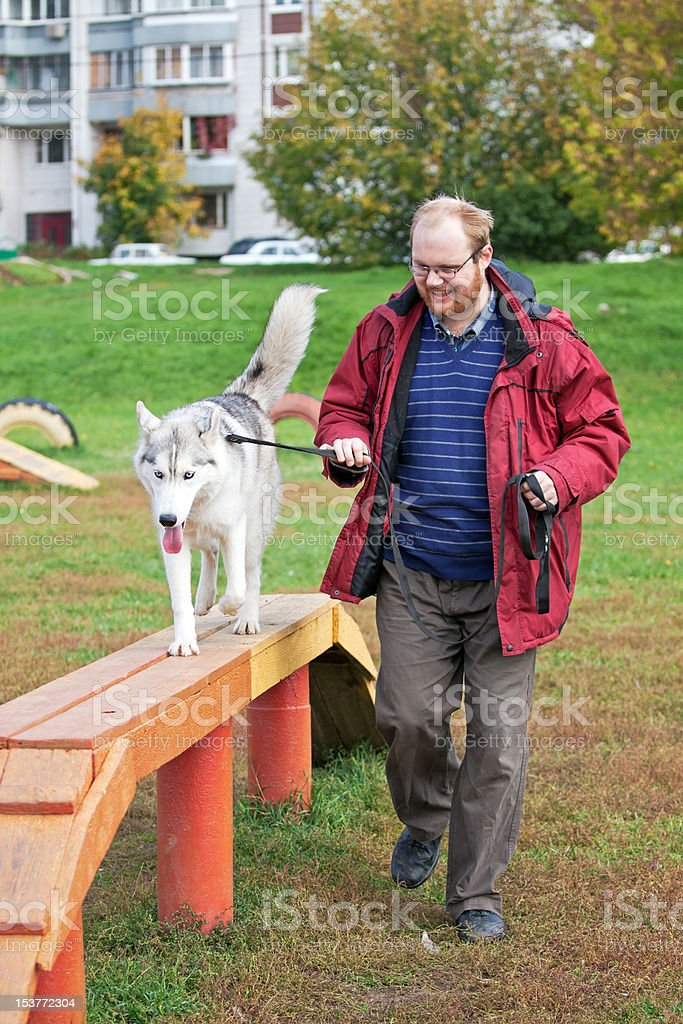 Siberian Husky with a man stock photo
