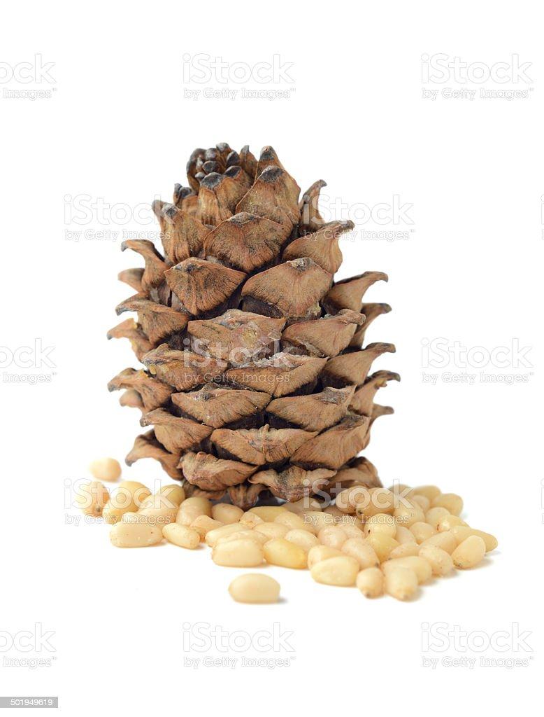 Siberian pine cone stock photo