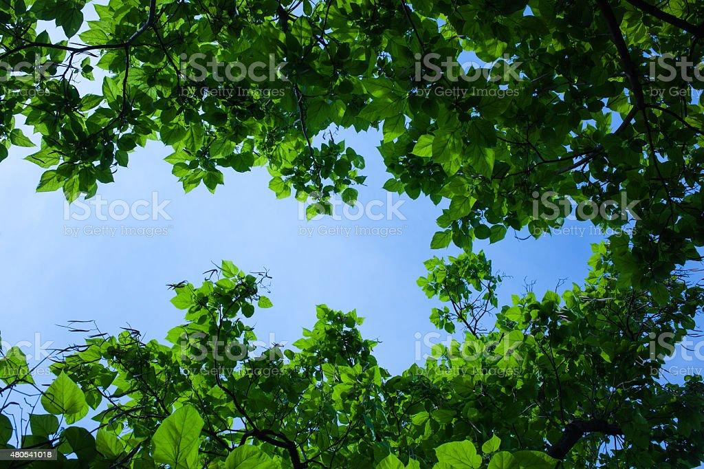 Sicht auf B?ume und Himmel stock photo