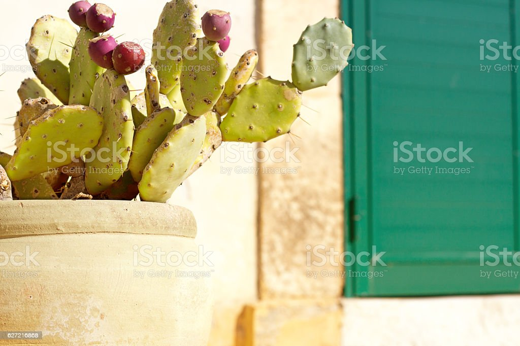 Sicily Style: Prickly Pear Cactus, Rustic Clay Pot, Green Door stock photo
