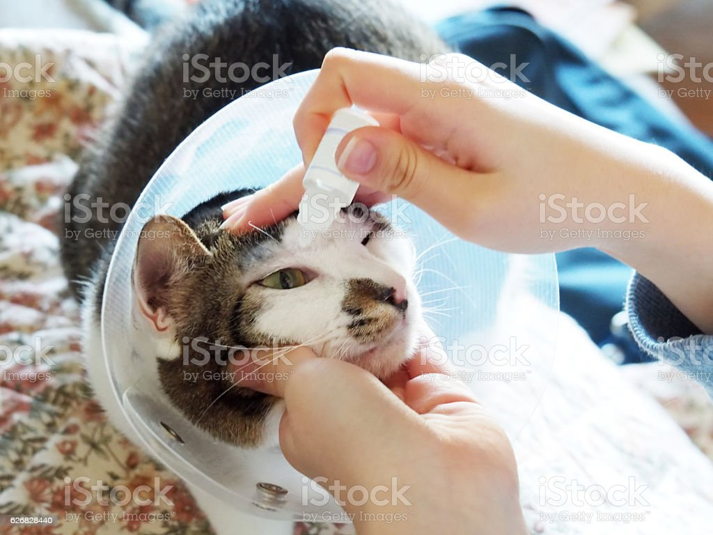 Sick Cat, Eye Drops stock photo