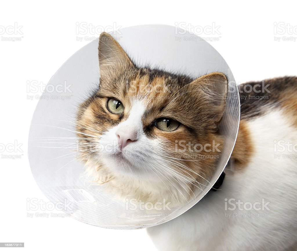 Sick cat. royalty-free stock photo