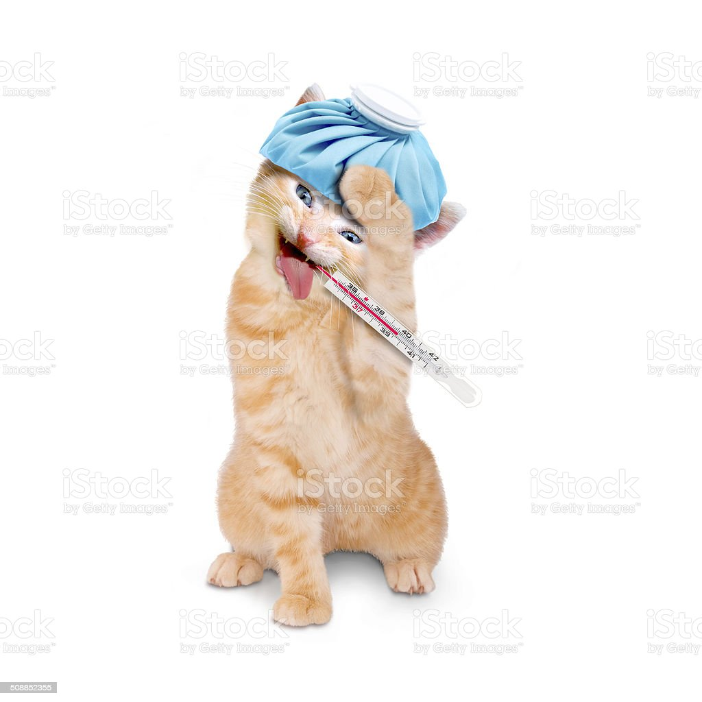 sick cat with ice pack and thermometer stock photo