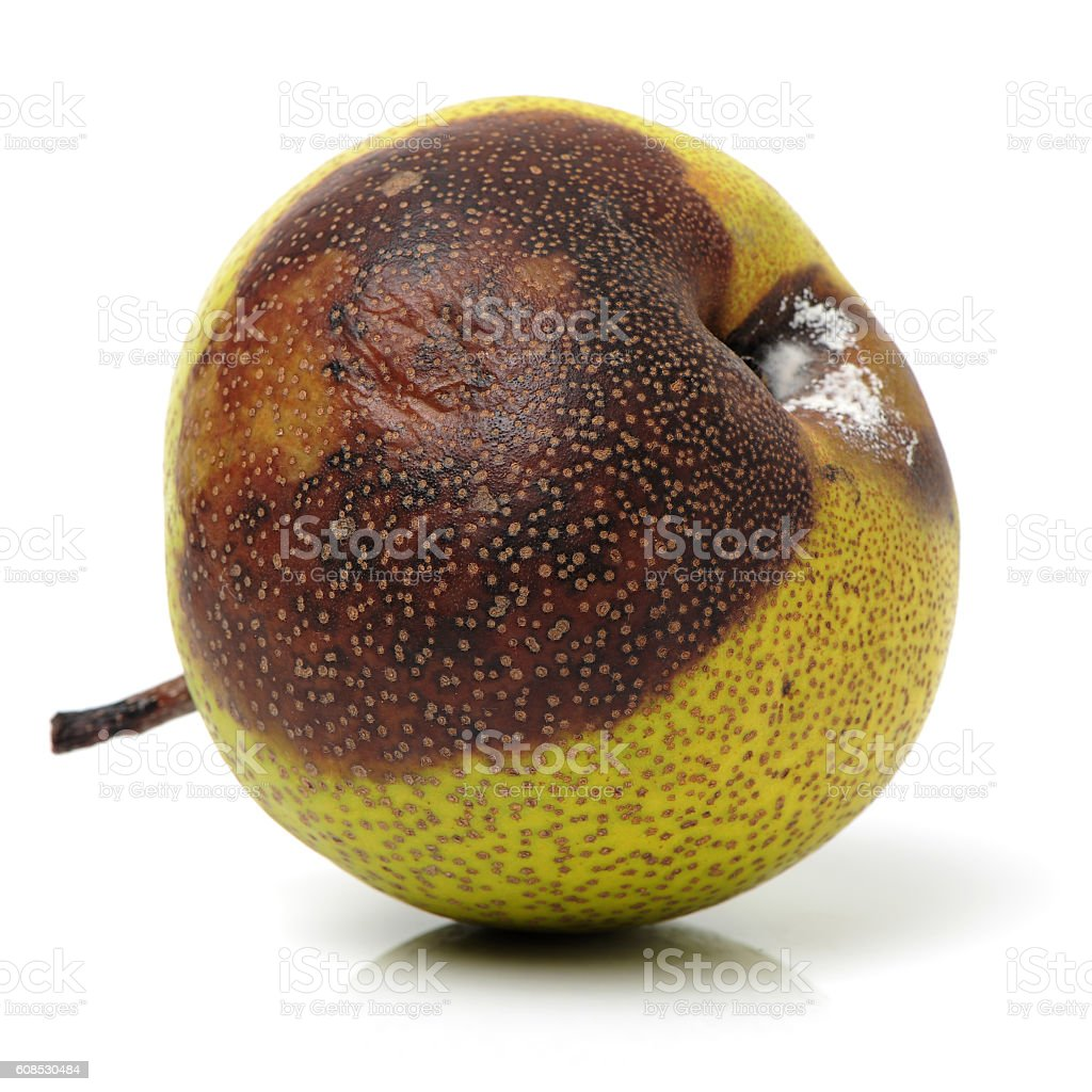 sick disgusting rotten pear with mold stock photo