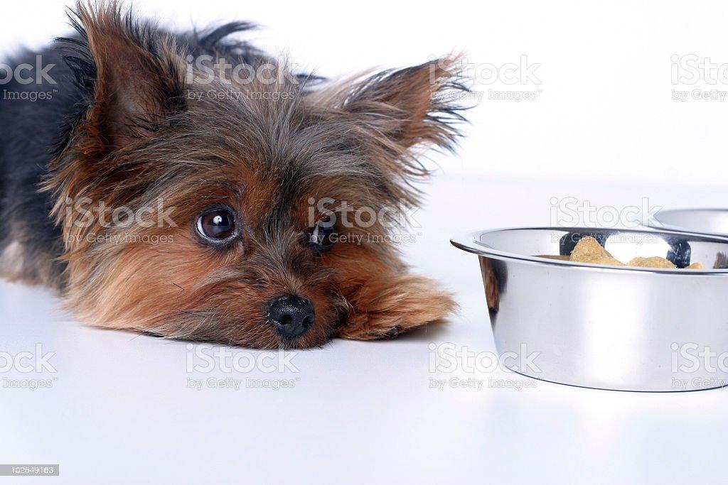Sick dog stock photo