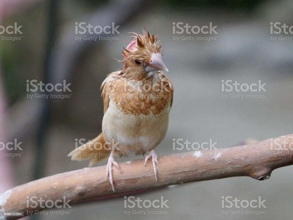 Sick Finch stock photo