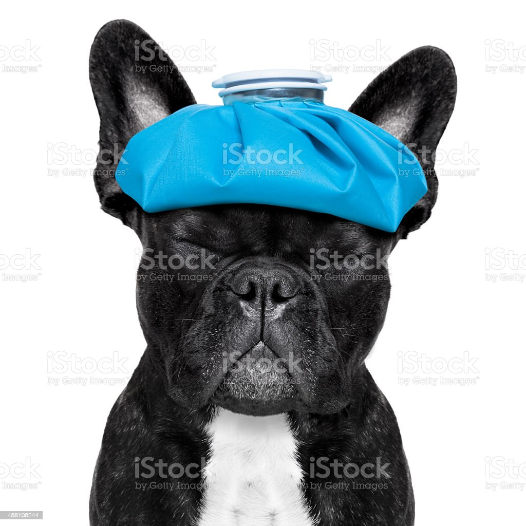 sick ill dog stock photo