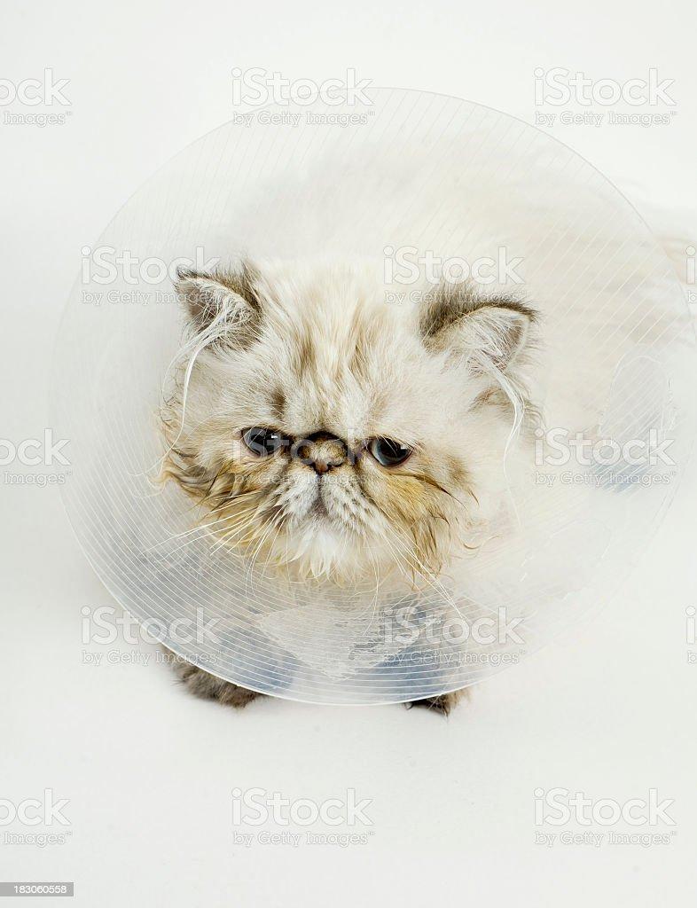 Sick kitty stock photo