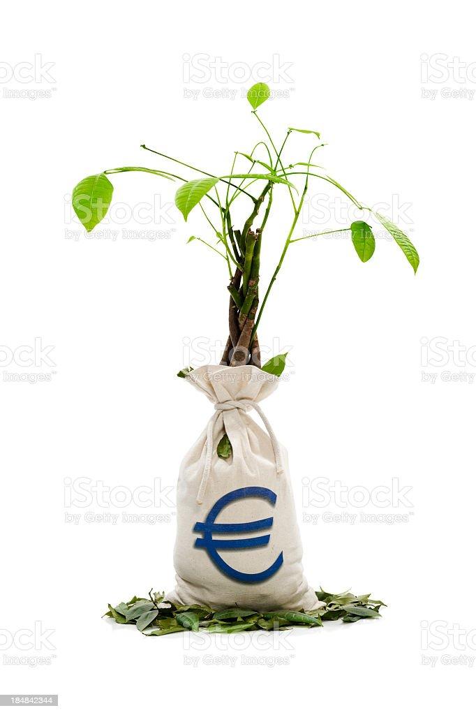 Sick Money Tree stock photo