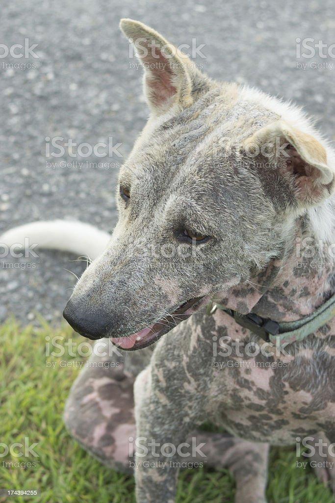 Sicks dog stock photo