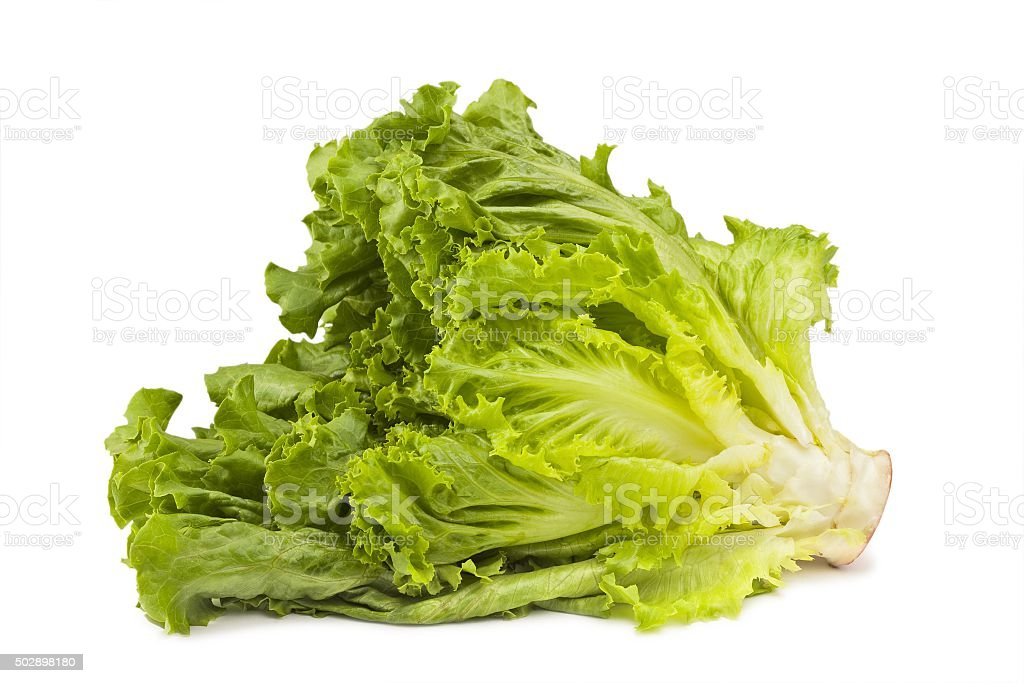 side of head of romaine lettuce stock photo