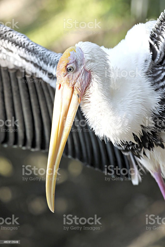 Side of the Stork's. stock photo