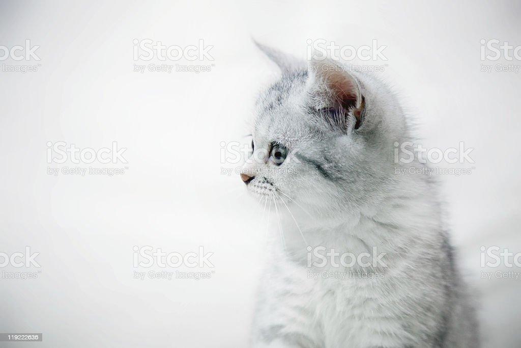 Un retrato de kitty foto de stock libre de derechos