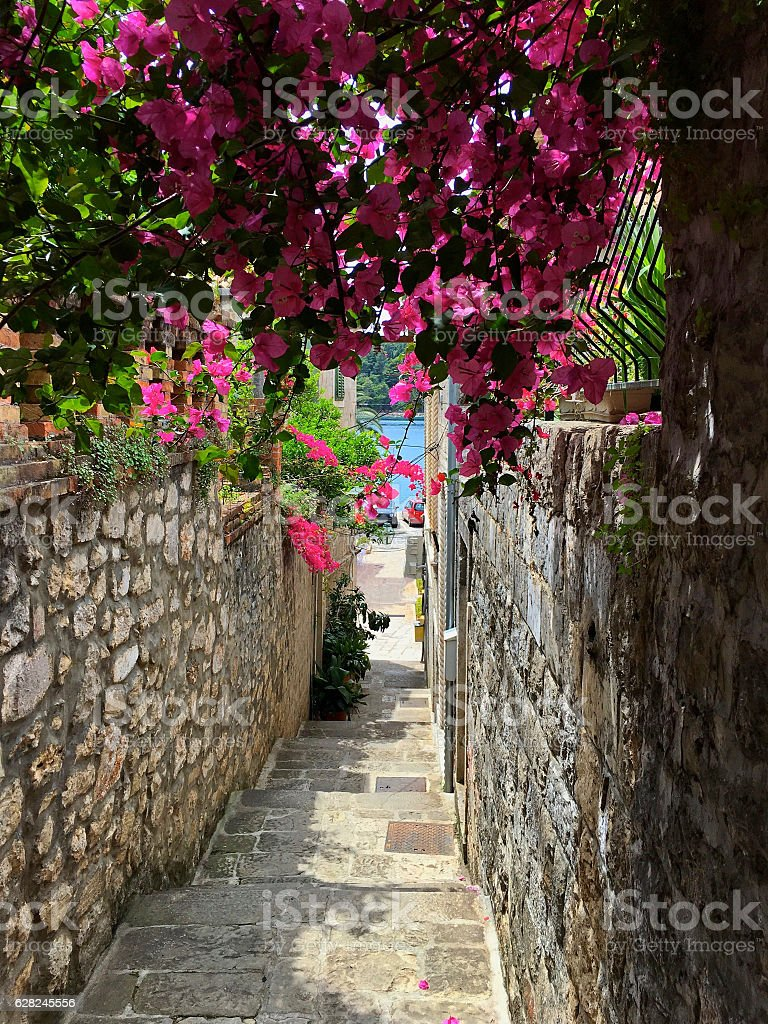 Side street in the Cavtat Old Town with bougainvillea arch stock photo