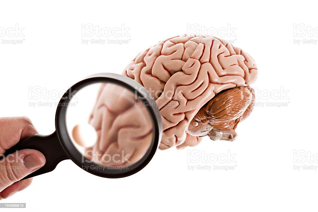 Side View Of A Brain Examined Isolated royalty-free stock photo