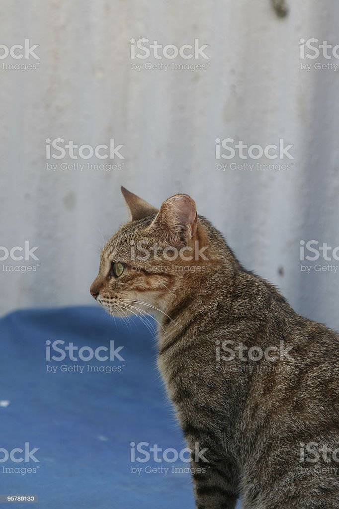 Vista lateral de un gato foto de stock libre de derechos