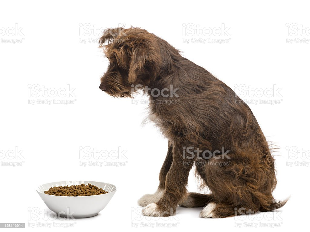 Side view of Crossbreed, 5 months old, sitting royalty-free stock photo
