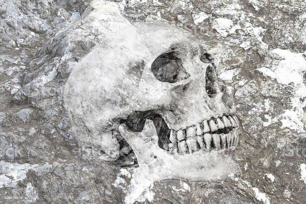 Side view of human skull in rock, clipping path stock photo