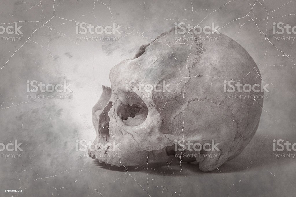 Side view of human skull old photo royalty-free stock photo