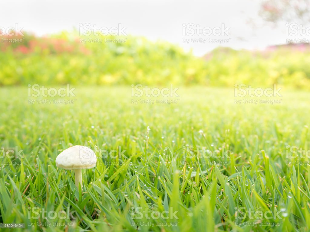 Side View of Mushroom Among the Prairie stock photo