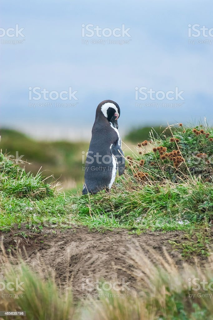 Side view of penguin in nature stock photo