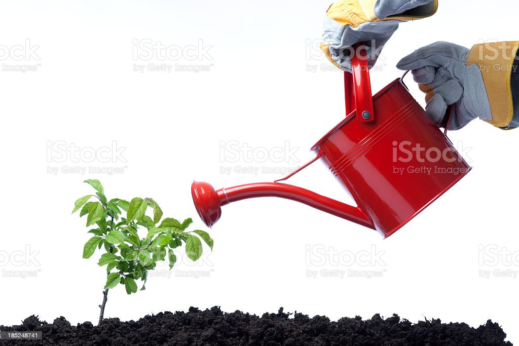 Side View Of red Watering Can On Green Plant stock photo
