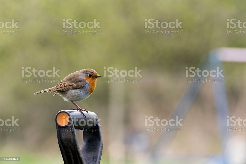 Side view of Robin Redbreast perched on a spade handle stock photo