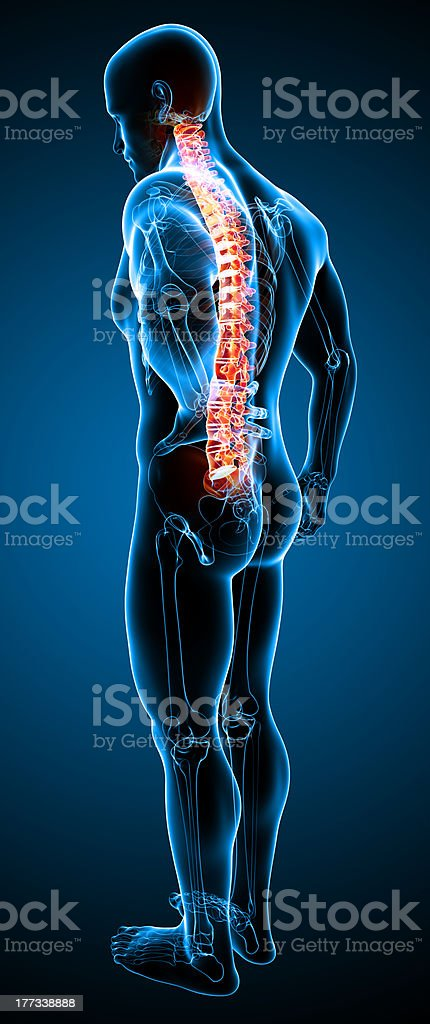side view of the male spinal pain royalty-free stock photo