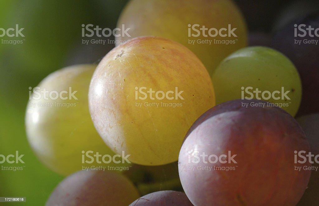 Sidelit Grapes royalty-free stock photo