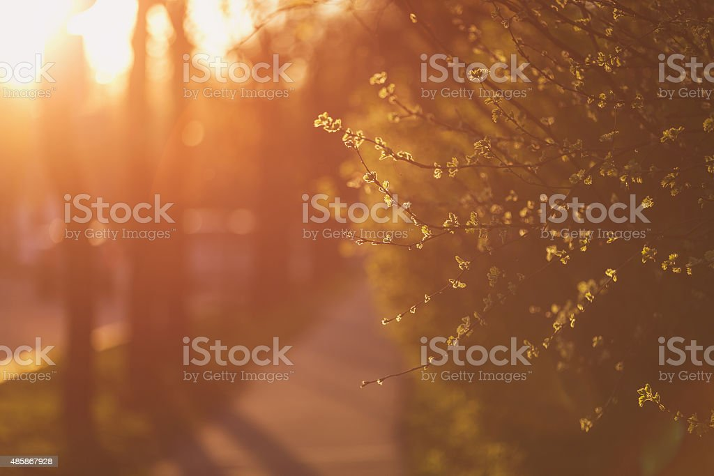sidewalk in town with sunset light, shallow focus stock photo