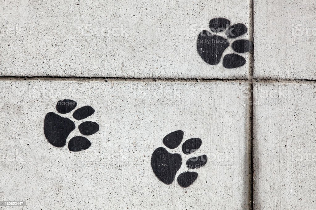 Sidewalk Paw Prints stock photo