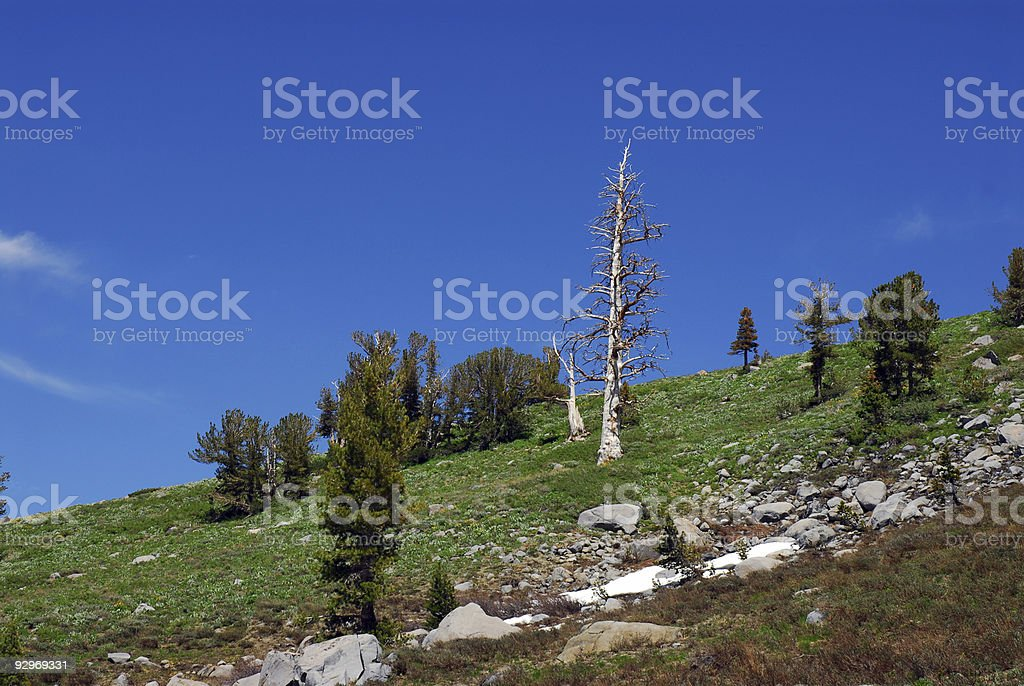 Sierra Slope royalty-free stock photo
