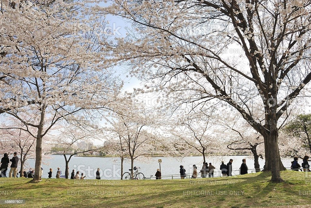 Sightseers at Cherry Festival near Tidal Basin stock photo