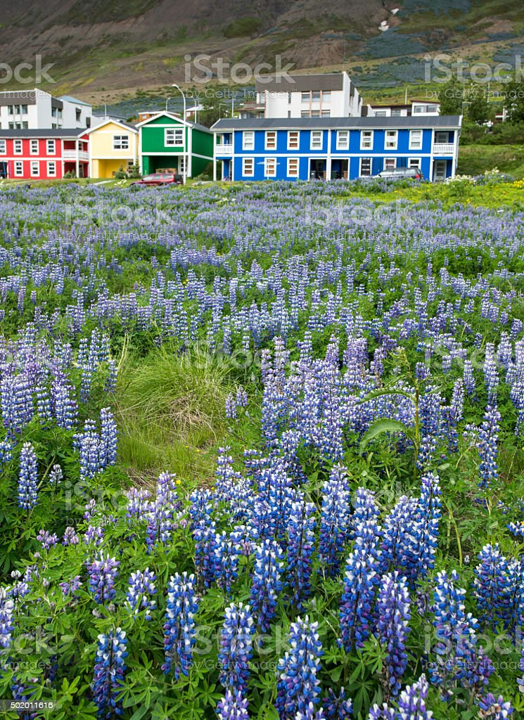 Siglufjordur town, Iceland stock photo