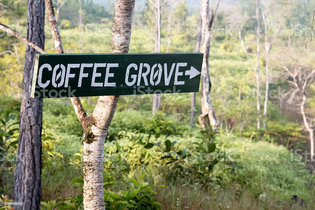 Sign for a coffee grove in a Belize jungle stock photo
