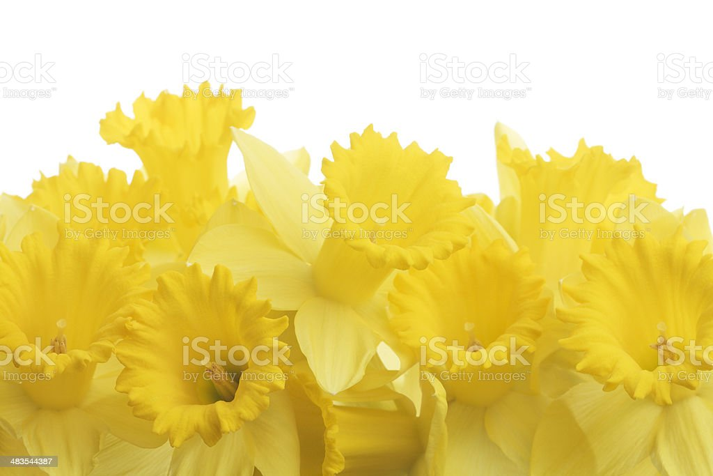 Sign of Spring royalty-free stock photo
