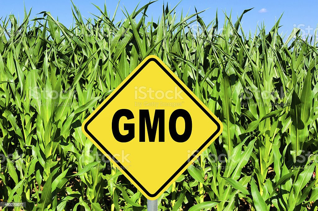 GMO sign stock photo